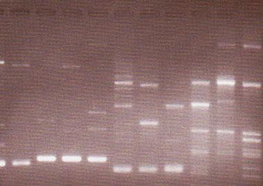 DNA解析による外来種駆除基礎研究 a